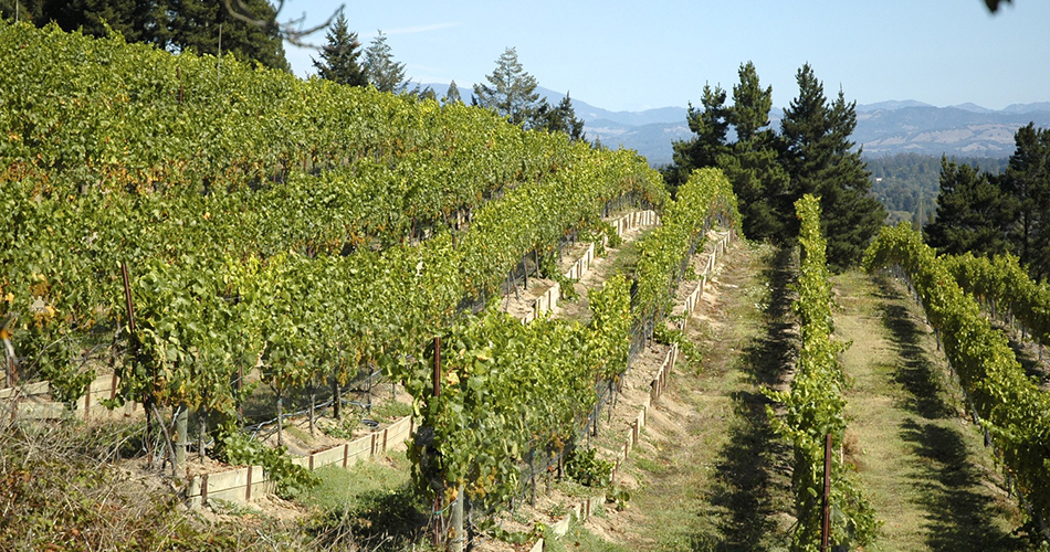 Hawk Hill Vineyard, Russian River Valley