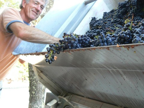 Chris Loxton working with grapes